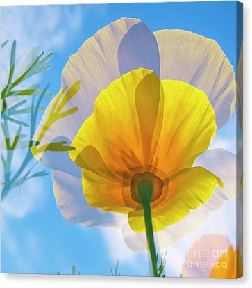 Poppy And Sun Canvas Print by Veikko Suikkanen