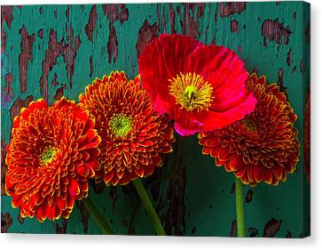 Poppy And Mums Canvas Print by Garry Gay