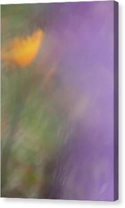 Canvas Print featuring the photograph Poppy And Purple Lupine by Roger Mullenhour