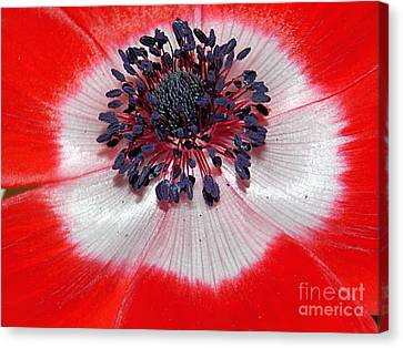 Poppy Canvas Print by Anita Faye