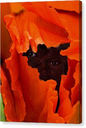 Poppy Faces By Jean Noren Canvas Print by Jean Noren