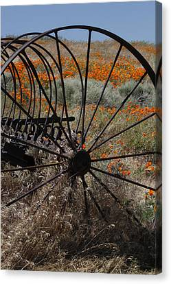 Canvas Print featuring the photograph Poppy Farm by Ivete Basso Photography