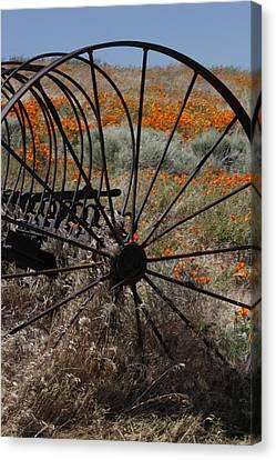Poppy Farm Canvas Print by Ivete Basso Photography
