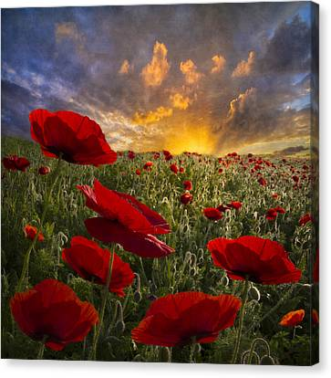 Poppy Field Canvas Print by Debra and Dave Vanderlaan