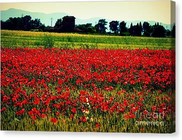 Poppy Field In Tuscany Canvas Print by Lainie Wrightson