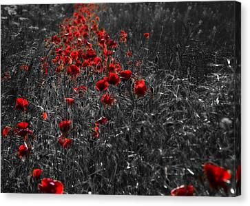 Poppy Field Canvas Print by Svetlana Sewell