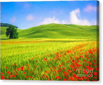 Poppy Field Canvas Print by Veikko Suikkanen