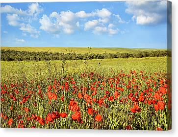 Canvas Print featuring the photograph Poppy Fields by Marion McCristall