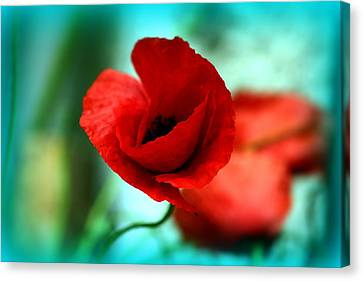 Canvas Print featuring the photograph Poppy Flower by Emanuel Tanjala