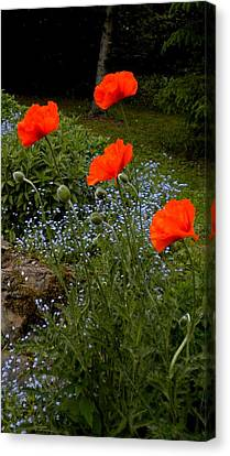 Poppy Foursome Canvas Print by Renate Nadi Wesley