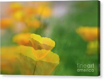 Poppy Garden Canvas Print by Veikko Suikkanen
