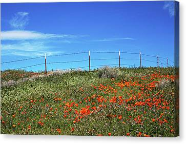 Poppy Hill- Art By Linda Woods Canvas Print by Linda Woods