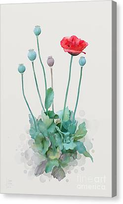 Poppy Canvas Print by Ivana Westin