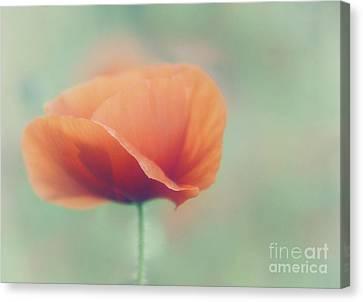 Poppy Canvas Print by Janet Burdon