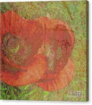 Canvas Print featuring the photograph Poppy Love by Traci Cottingham