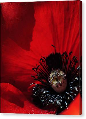 Poppy No. 2 Canvas Print by The Forests Edge Photography - Diane Sandoval