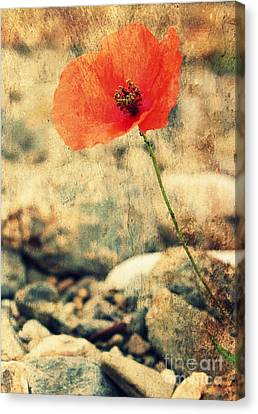 Rememberance Canvas Print - Poppy On The Rocks by Clare Bevan