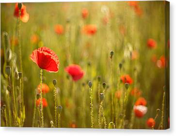 Poppy Party IIi Canvas Print by Roeselien Raimond