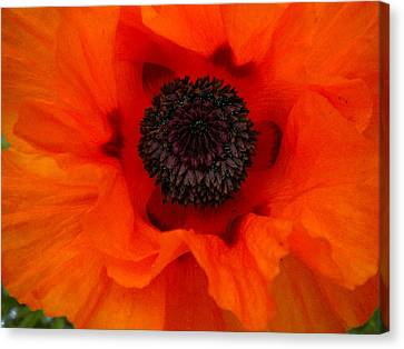 Canvas Print featuring the painting Poppy by Renate Nadi Wesley