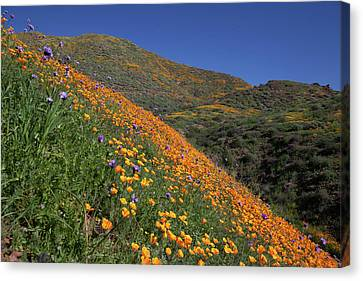 Canvas Print featuring the photograph Poppy Superbloom On Hillside by Cliff Wassmann