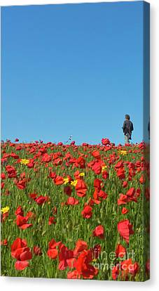 Poppy Triptych Panel 1 Canvas Print by Terri Waters