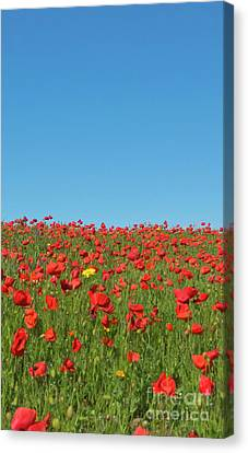 Poppy Triptych Panel 2 Canvas Print by Terri Waters