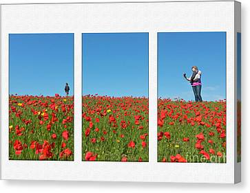 Poppy Triptych Canvas Print by Terri Waters