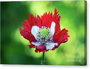 Poppy Victoria Cross Canvas Print