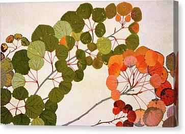 Populus Tremula Or European Aspen Canvas Print by Philippe Robert