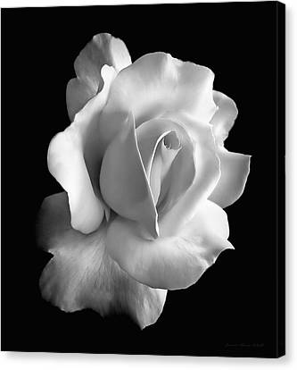 Porcelain Rose Flower Black And White Canvas Print by Jennie Marie Schell