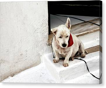 Scottish Dog Canvas Print - Pork Chop by John Rizzuto