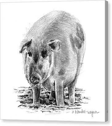 Porker Pig - Pride Of The Barnyard Canvas Print by Arline Wagner