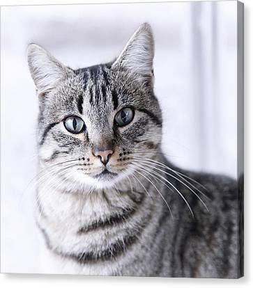 Portrait Gray Tabby Cat Canvas Print
