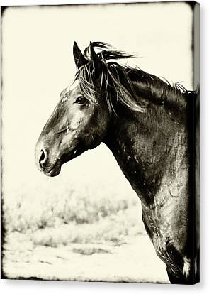 Portrait Canvas Print by Mary Hone