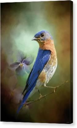 Portrait Of A Bluebird Canvas Print