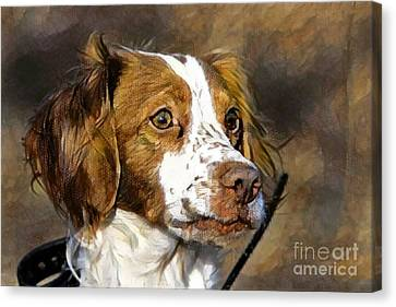 Portrait Of A Brittany - D009983-a Canvas Print by Daniel Dempster