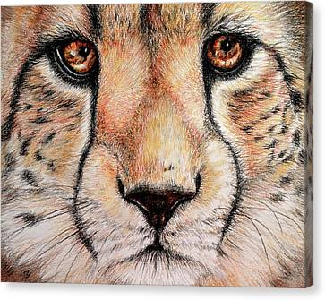 Portrait Of A Cheetah Canvas Print by Heidi Kriel