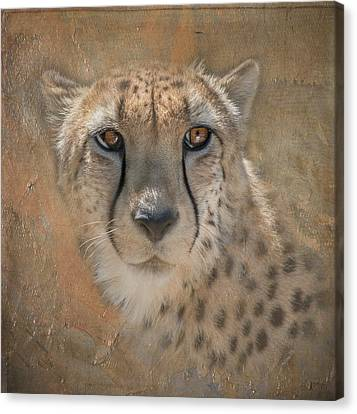 Portrait Of A Cheetah Canvas Print