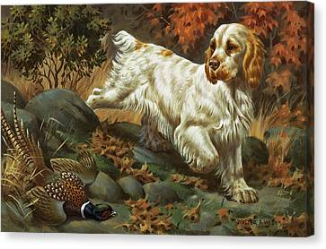 Portrait Of A Clumber Spaniel Hunting Canvas Print by Walter A. Weber