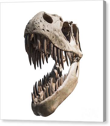 Portrait Of A Dinosaur Skeleton, Isolated On Pure White. Canvas Print by Caio Caldas
