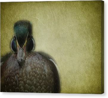 Portrait Of A Duck Canvas Print by Rebecca Cozart