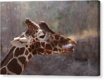Portrait Of A Giraffe Canvas Print by Ernie Echols