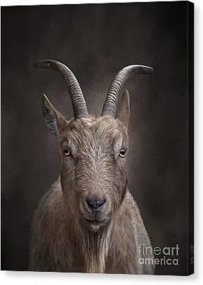 Portrait Of A Goat Canvas Print