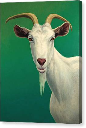 Portrait Of A Goat Canvas Print by James W Johnson