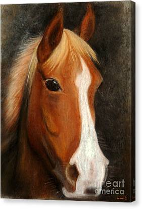 Portrait Of A Horse Canvas Print by Jasna Dragun