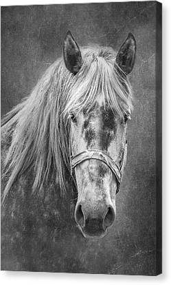 Canvas Print featuring the photograph Portrait Of A Horse by Tom Mc Nemar