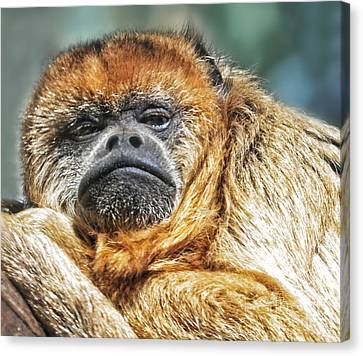 Year Of The Monkey Canvas Print - Portrait Of A Howler Monkey by Jim Fitzpatrick
