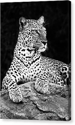 Portrait Of A Leopard Canvas Print by Richard Garvey-Williams