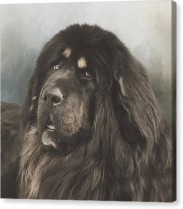 Portrait Of A Tibetan Mastiff Canvas Print by Wolf Shadow  Photography