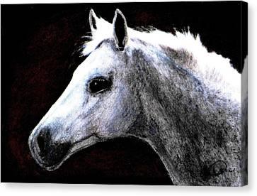 Portrait Of A Pale Horse Canvas Print by Angela Davies